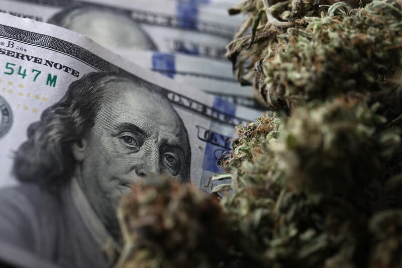 one hundred dollar bills and cannabis buds, cannabis careers
