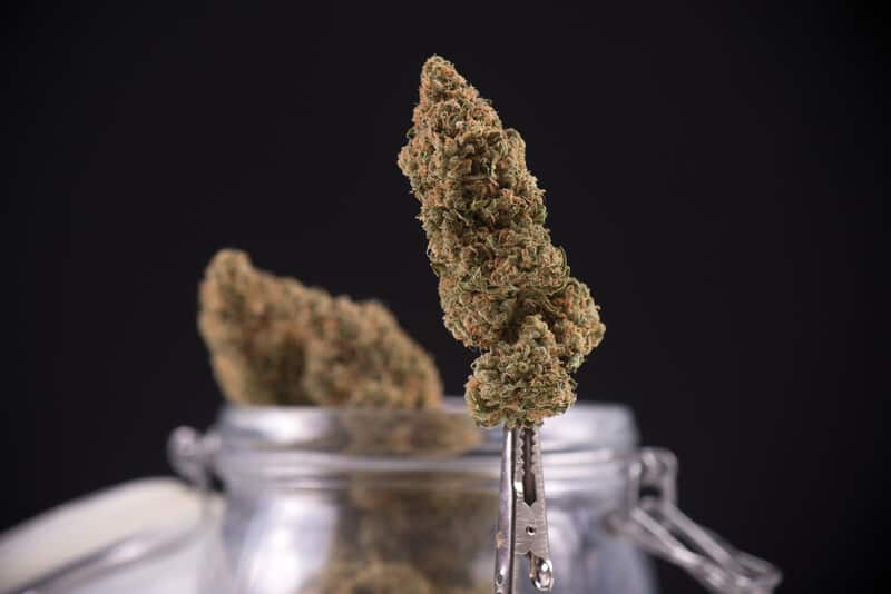 cannabis buds in glass jars, mile high dispensary